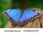 butterfly   Shutterstock . vector #139842259