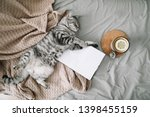 Stock photo view from above of funny cat sleeping on the blanket on hygge background cozy flatlay of female 1398455159