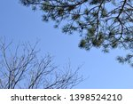 bare branches without leaves... | Shutterstock . vector #1398524210