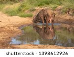 african buffalo by the water ... | Shutterstock . vector #1398612926