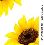 Sunflower Vector Background