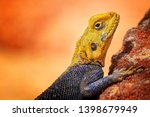 close up photo of yellow and... | Shutterstock . vector #1398679949