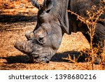 a close up photo of rhino ... | Shutterstock . vector #1398680216