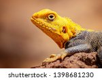 close up photo of yellow and... | Shutterstock . vector #1398681230