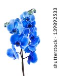 bouquet of blue orchid isolated ... | Shutterstock . vector #139892533