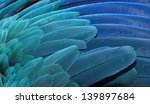Blue And Gold Macaw Wing...
