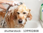 a dog taking a shower with soap ...   Shutterstock . vector #139902808