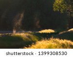 flies and mosquitos above field ...   Shutterstock . vector #1399308530