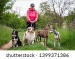 Stock photo professional dog walker with four dogs outdoors woman walk with border collie australian shepherd 1399371386