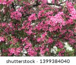 cherrywood blossoms in... | Shutterstock . vector #1399384040