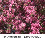 beautiful flowers of white and... | Shutterstock . vector #1399404020