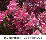 beautiful flowers of white and... | Shutterstock . vector #1399404023