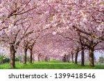 cherry blossom trees chikuma... | Shutterstock . vector #1399418546