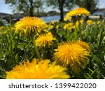 dandelion.art beautiful spring... | Shutterstock . vector #1399422020