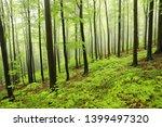 springtime deciduous forest in... | Shutterstock . vector #1399497320
