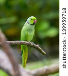Green Parrot Bird On Wood Branch