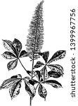 aesculus parviflorais known as... | Shutterstock .eps vector #1399967756