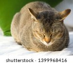 cute brown cat resting on white ... | Shutterstock . vector #1399968416