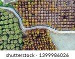 deciduous cypress forest in... | Shutterstock . vector #1399986026
