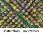 deciduous cypress forest in... | Shutterstock . vector #1399986029