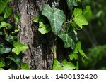 old and new spring leavaes of... | Shutterstock . vector #1400132420