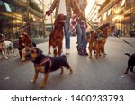 Stock photo group of happy dog walking on leash with professional dog walker on the street 1400233793