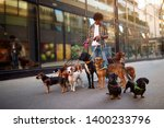 Stock photo dogs on the streets on leash with smiling man professional dog walker 1400233796