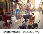 Stock photo couple dog walker with group of dogs enjoying in walk outdoors 1400233799