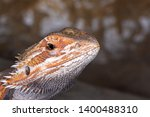 close up photo of orange and... | Shutterstock . vector #1400488310
