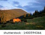chestnut horse grazing in a... | Shutterstock . vector #1400594366