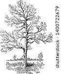 picture of sassafras tree.... | Shutterstock .eps vector #1400722679
