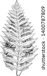 a picture showing polypodium... | Shutterstock .eps vector #1400787809