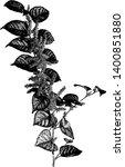 japanese knotweed  polygonum...   Shutterstock .eps vector #1400851880