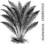 a picture showing aspidium... | Shutterstock .eps vector #1400851913