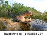 Alligator  Everglades  Reptils...