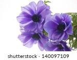 purple anemone on white | Shutterstock . vector #140097109