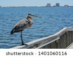 a great blue heron standing on... | Shutterstock . vector #1401060116
