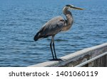 a great blue heron standing on... | Shutterstock . vector #1401060119