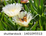 Butterfly   Vanessa Cardui On...