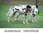 Dalmatian Spotty Dog Pet Playing