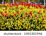 red tulips  in london. spring... | Shutterstock . vector #1401301946