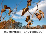 branches with vine leaves. dry... | Shutterstock . vector #1401488330
