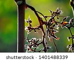 remains of bunches of grapes... | Shutterstock . vector #1401488339