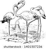 flamingoes large wading birds...   Shutterstock .eps vector #1401507236
