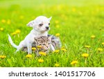 Stock photo chihuahua puppy hugging kitten on a dandelion field empty space for text 1401517706