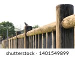 Birds On The Fence In Spring