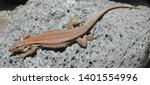 lizard close up  macro  copy... | Shutterstock . vector #1401554996