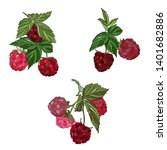 raspberries vector drawing.... | Shutterstock .eps vector #1401682886