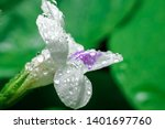 white flowers with dew and... | Shutterstock . vector #1401697760