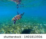 sea turtle swim in water of... | Shutterstock . vector #1401813506
